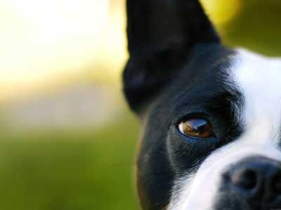 【涙】犬も悲しいと泣くのでしょうか?