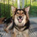 雑種犬が純血種の犬について思うこと。